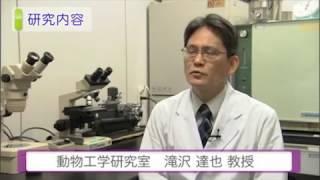 麻布大学 研究室紹介16_滝沢 達也 教授