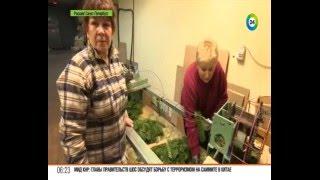 видео Секреты новогодней елочки | Интернет-магазин «Наша Ёлка»