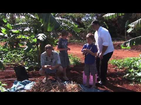 Food Revolution Maui - West Maui Cooperative