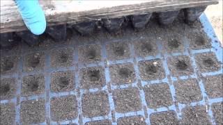 АТ27 Выращивание рассады на вермикомпосте(биогумусе) от калифорнийских червей. Пошаговое видео(Здоровая, насыщенная всеми питательными элементами на весь срок роста рассада как для экологически чистог..., 2014-02-16T21:56:45.000Z)