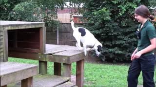 Dogs Trust Merseyside: Jack