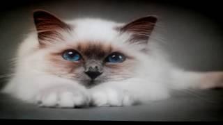 Детский хор Великан- - Кошка беспородная