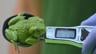 Annual weigh in at ZSL London Zoo