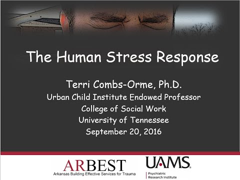 The Human Stress Response