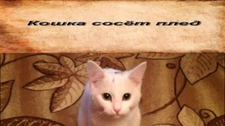 Кошка сосёт плед