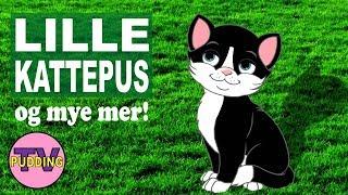 Lille kattepus - og mye mer! | Barnesang-MIX