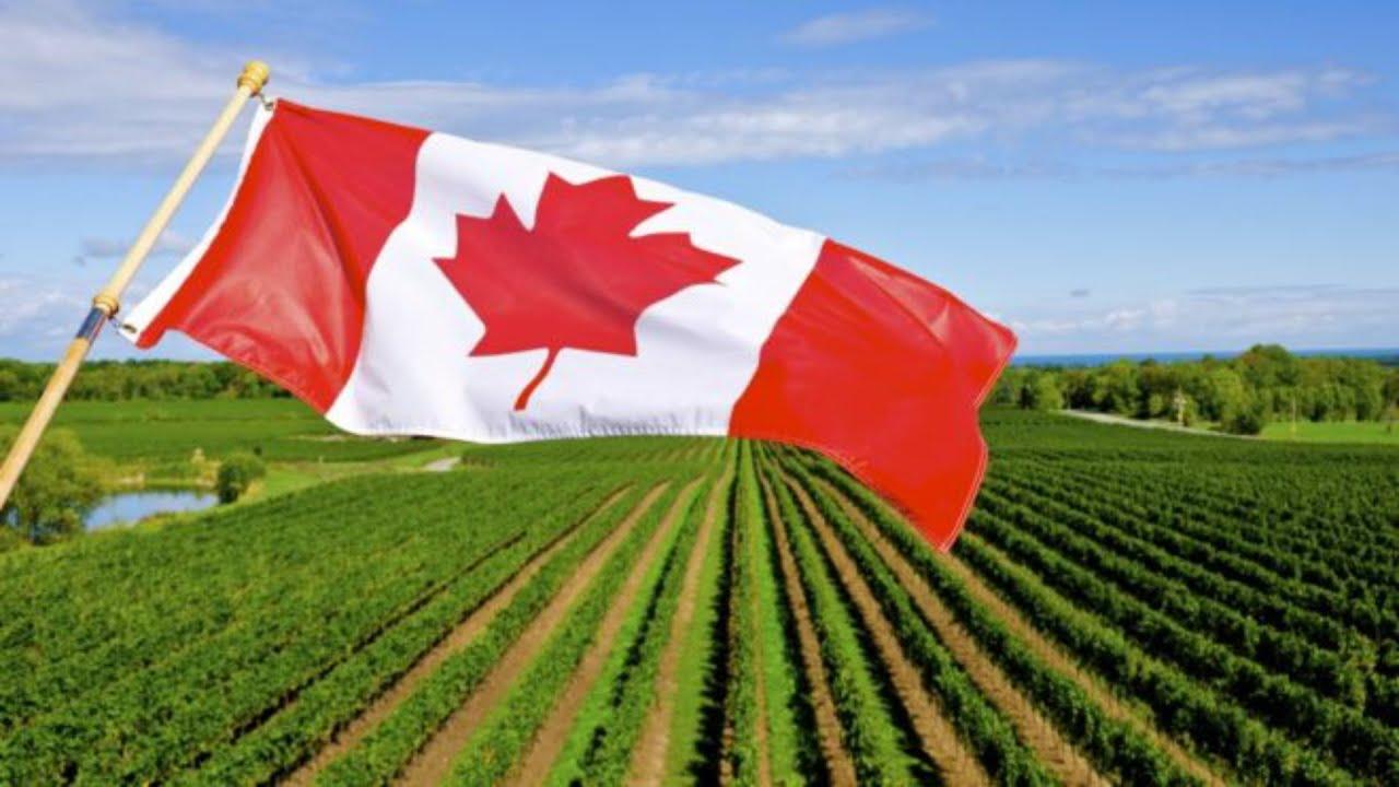 Por Covid Canada dará ciudadania a todos los campesinos Hispanos.