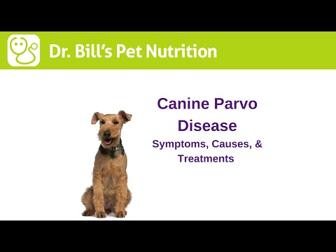 Canine Parvo Disease | Symptoms, Causes, & Treatments | Dr. Bill's Pet Nutrition