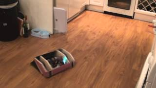 (Mr Pink) Comat Robot Drive Test with 14.8V Lipo Battery