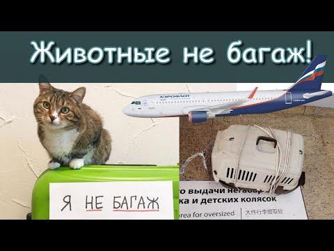 Смертельный перелёт. Коты в Аэрофлоте. Перевозка животных