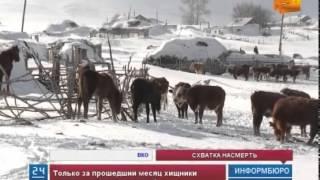 Жители аула в Восточно-Казахстанской области страдают от нашествия волков