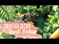 Bodhi's Crested Gecko Tank Setup | Exo Terra Cage Setup