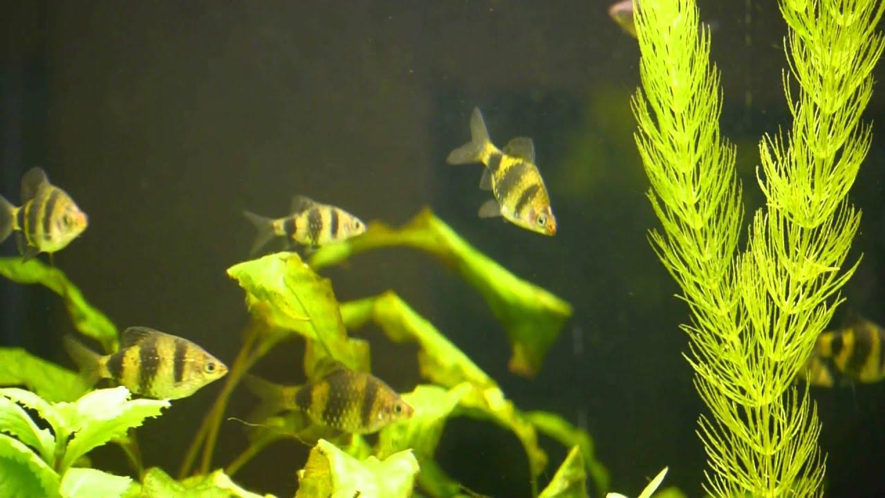 Botanischer Garten Halle Saale Pflanzen, Tiere Unter Wasser