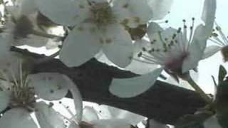 Allison Crowe -  Hallelujah (Leonard Cohen - cover)