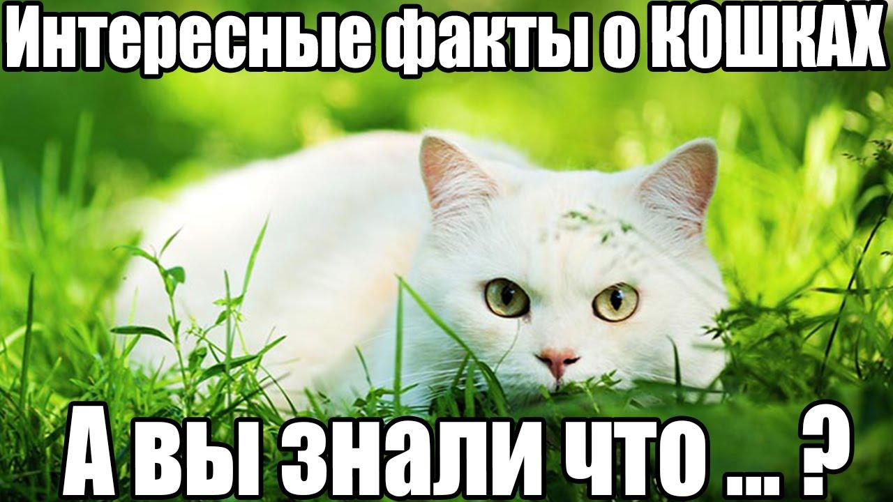Интересные факты о кошках и котах видео
