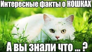 ТОП 15 интересные факты про КОШЕК. А вы знали что..? Кошки. Породы кошек. Фото, видео кошек.