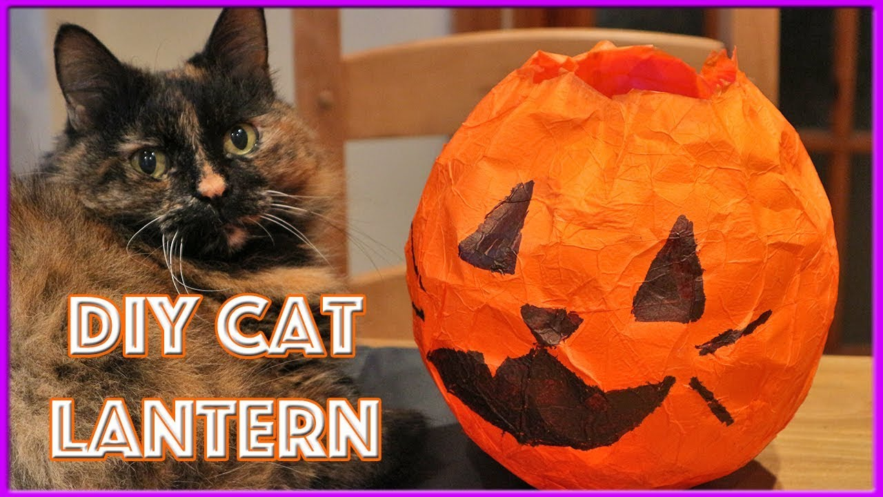 dd557c491 How To Make Halloween Lantern | DIY Cat Jack'o Lantern | Easy DIY Paper Cat  Lantern!