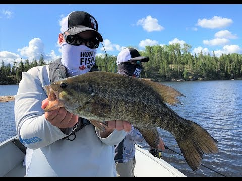 Unbelievable Smallmouth Bass Fishing At Q Lake Lodge - Manitoba Hot Bite
