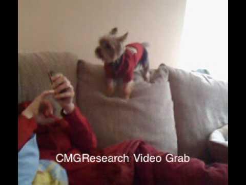 Gino the barking dog