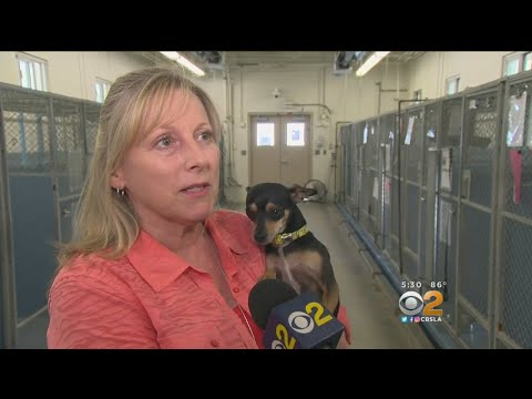 L.A. County Supervisors Agree To Increase Dog Limit Per Household from 3 To 4