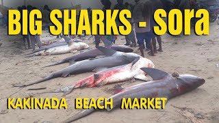 Big size fish Sharks at Kakinada Beach Market Andhra Pradesh - పెద్ద సొర చేపలు