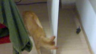 Cat killing the rat in my room in Hall 15 NTU