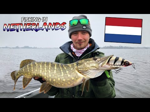 Fishing Pike in Netherlands🇳🇱 - TIPS & TRICKS HOW | Team Galant