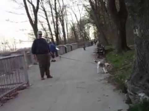 Survivor Hound Dog Meets Daisy Toy Poodle Kid Bike Riding Friendship Trail Waverly Beach FE ON