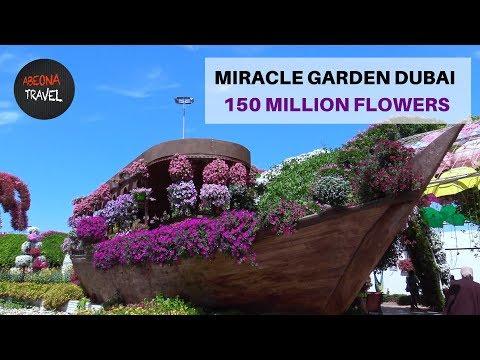 150 Million Flowers. Miracle Garden Dubai. A world of Floral Wonder.