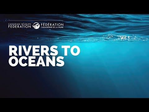 Rivers to Oceans: Dr. Sean Brillant, CWF Marine Program Manager