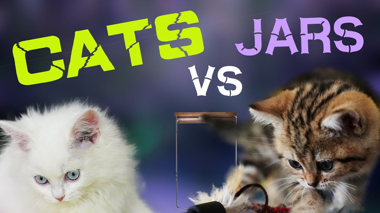 Cats and glass jars | Cute kitten life | food choices for Cats in glass jars
