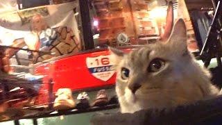 Cat HAL met ET while enjoy walking?!