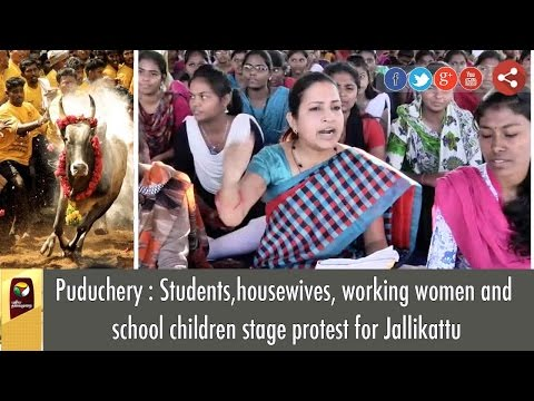 Jallikattu: Students,Housewives, Working women & School Children's Protest in Puduchery