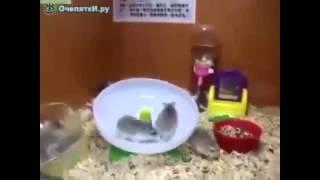 Not ХБ шоу НАРЕЗКА СМЕШНЫХ ПРИКОЛОВ ржака