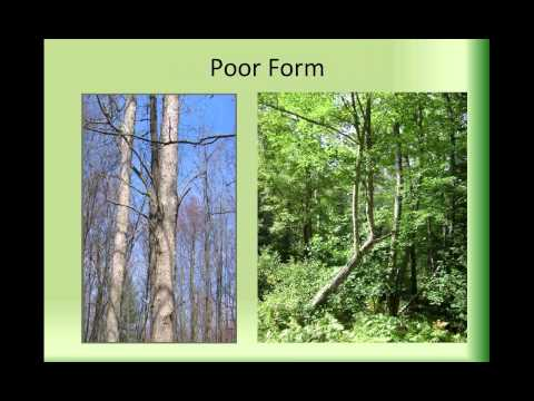 Learn About Your Land  Timber Sale series Session 2