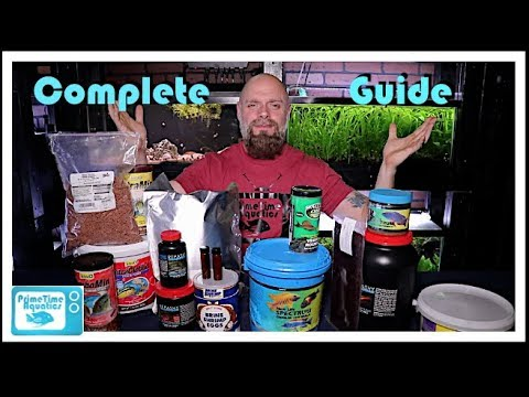 Fish Food - Everything You Need to Know!