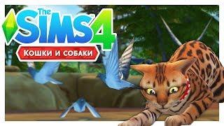 ГУЛЬ-ГУЛЬ-ГУЛЬ! 🐦\The Sims 4: Кошки и собаки #19