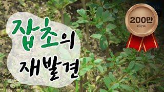 음식도 되고 농사도 돕는 잡초의 재발견 / YTN 사이언스