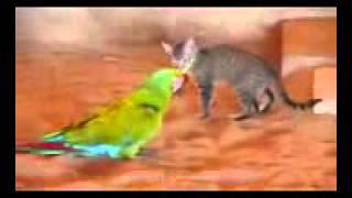 ►►  Попугай играется с котом