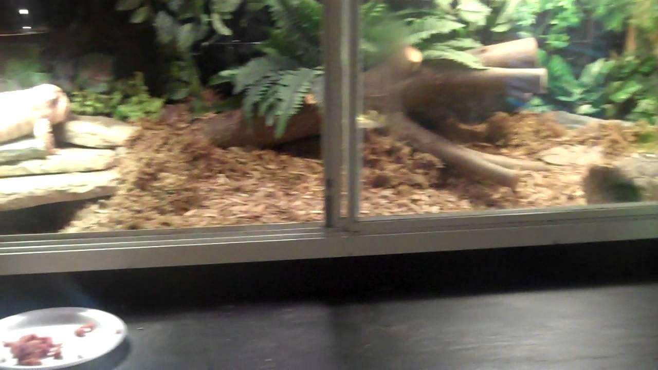 Free Roam Reptile Room