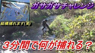 ガサガサチャレンジ の巻 thumbnail