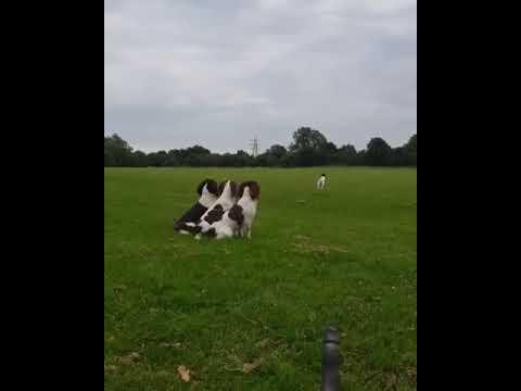 Lucky one dog!!!