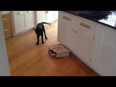 The Cat's Out Of The Bag And This Puppy Is Terrified
