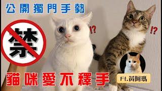 【豆漿實測】千萬別用這招 怕貓太爽...  ft.黃阿瑪