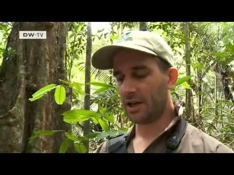 Protección de especies en Surinam.mp4
