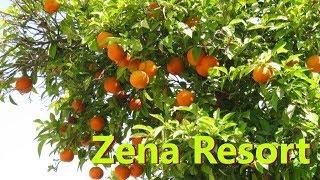 ТУРЦИЯ апрель отель Zena Resort 5 бассейн спорт зал номер с видом на море