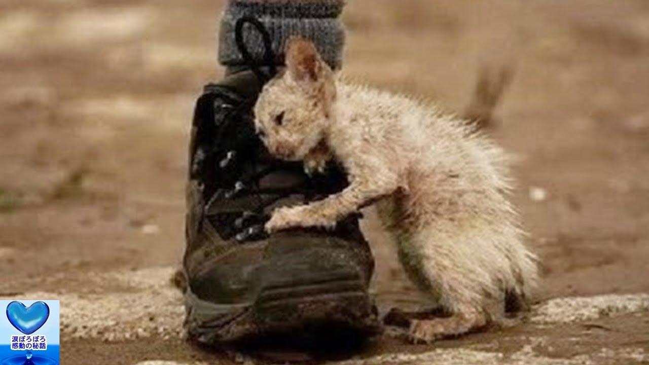 孤独に耐えてきた一匹の野良猫。周囲からの愛情を生涯探し求め続けた姿に涙が止まらない・・・【感動】