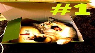 Смешные животные. Коты в коробке. Попробуйте не засмеяться!/Funny cats - Funniest fails