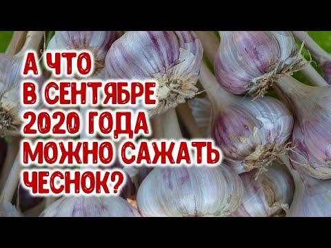 А что в сентябре 2020 года можно сажать чеснок? Агрогороскоп на сентябрь 2020