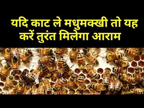 मधुमखी काटने का